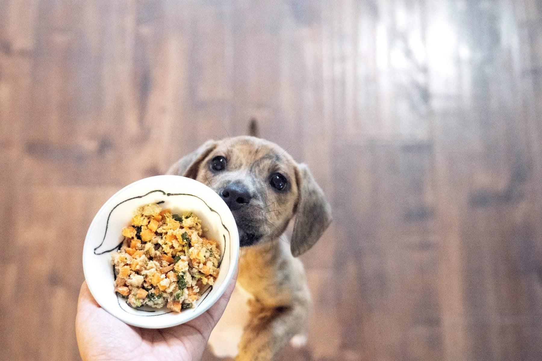 Merrick dog food Petco