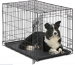 Petco Large Dog Crate: FAQs & Detailed Guides To Purchase